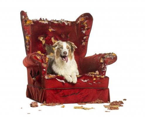 Stol-hund